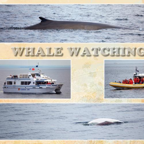 Watch whales in Quebec City with direct Canadian host BestCanadatours.com